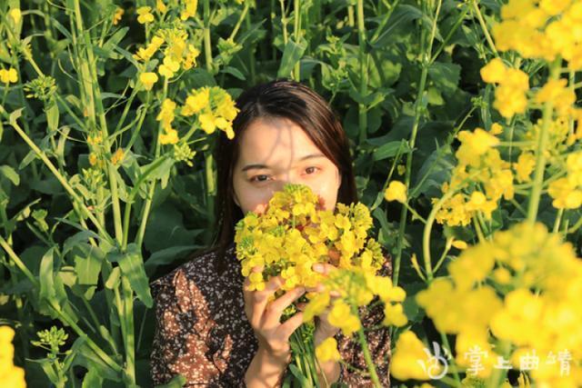 罗平油菜花有多美?游客说:每年都来,怎么也看不够